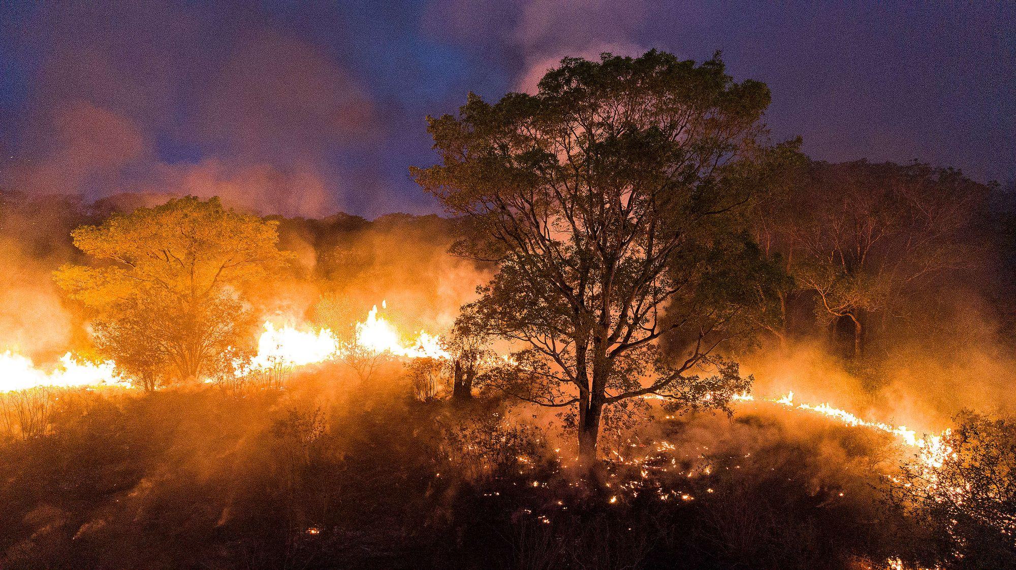 Primavera em Chamas - Amazônia e Pantanal Queimando