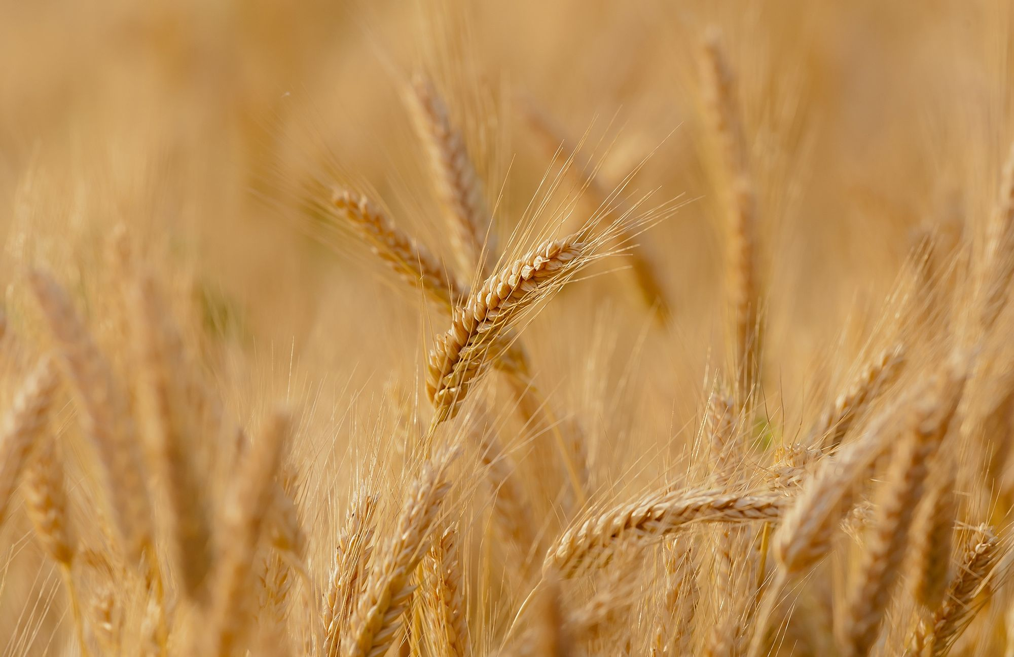 Produção de grãos deverá atingir 330 milhões de toneladas na próxima década